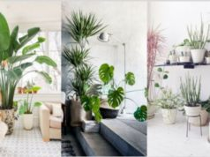 Indoor Plants that Clean the Air and Remove Toxins: